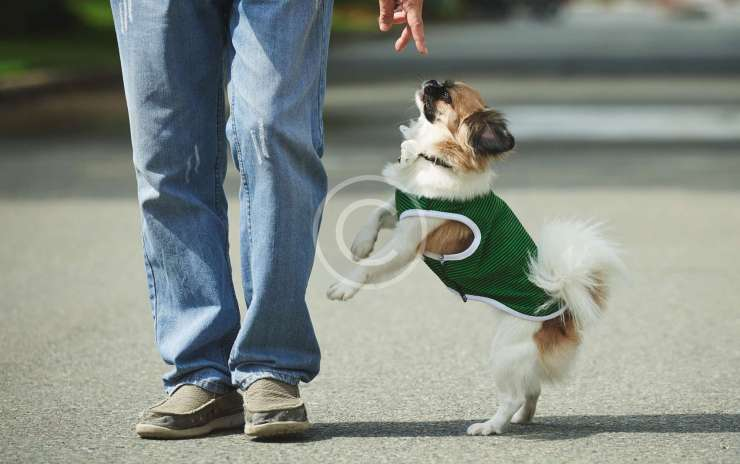 Dog Walking Helps Keep Your Dog Sane